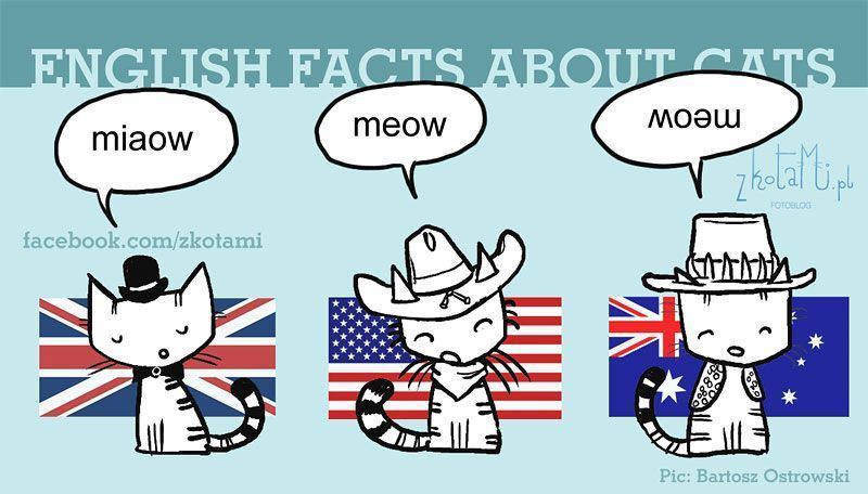 Mjau na engleskom