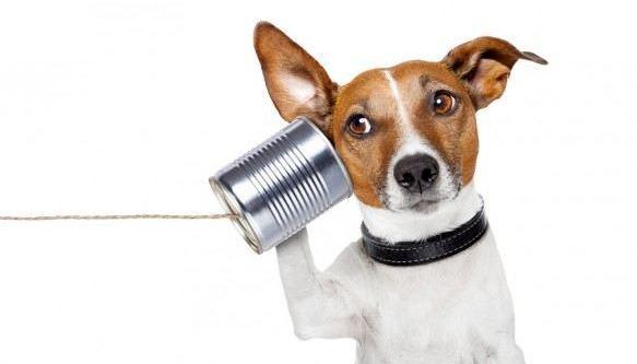 Kako razgovarati sa psima